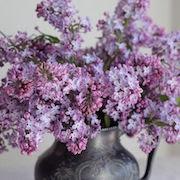 Суеверия цветы