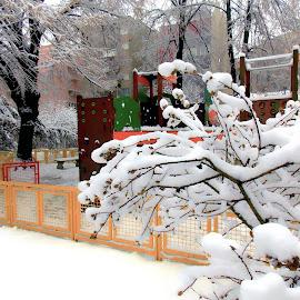 by Slavica Trajkovic - City,  Street & Park  City Parks