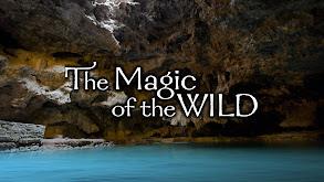 The Magic of the Wild thumbnail