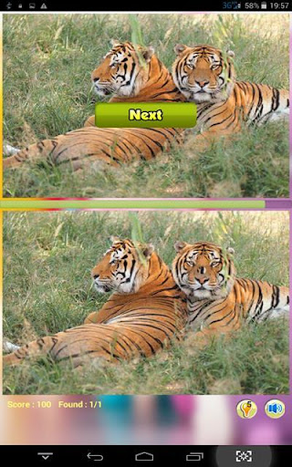 Wild Tiger Find Differerence