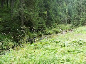 Photo: początek Doliny Małej Łąki