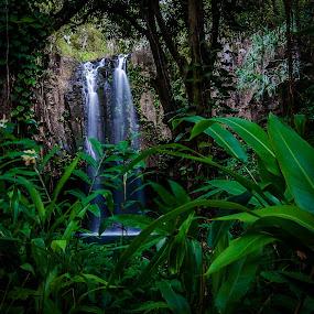 Maui Waterfall by Matt Mcclenahan - Landscapes Forests ( serene, foliage, waterfall, long exposure, hawaii )