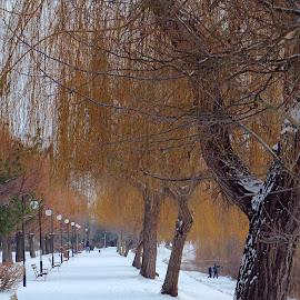 Arad Park, Romania by Alin Achim R - City,  Street & Park  City Parks