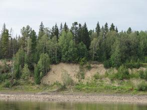Photo: Лапорская протока, лес на круче