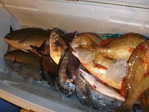 Photo: 釣果です! ヤマダさんのクーラー。 いいサイズのオナガも入りました。