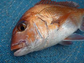 Photo: GOODサイズの真鯛!