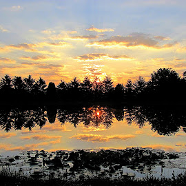 Reflection Beauty W/Lily Pad by Tina Dare - Landscapes Sunsets & Sunrises ( sunrise, reflection, nature, colorfull, lily pads, clouds, landscape )