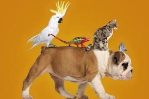 Concurso de Mascotas Ciudad de Almer�a