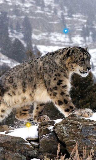 Snow Leopard Best HD LWP