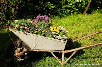 Photo: unser bewegliches Blumenbeet