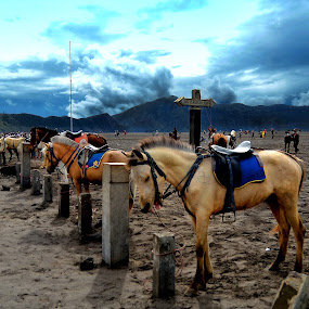 parking lot @Bromo by Adang Yusuf - Animals Horses