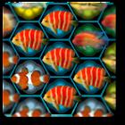 Fish Match icon