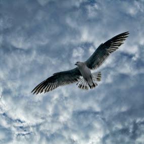 Gaviota 3 by Nallely Martinez - Animals Birds ( gaviota, cielo, textura, azul,  )