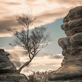 Tree by Darrell Evans - Nature Up Close Trees & Bushes ( north yorkshire, carboniferous, monstrosities, formation, geology, sandstone, stone, outdoor, summerbridge, rocks, harrogate, millstone grit, brimham rocks, landscape )