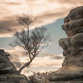 Tree by Darrell Evans - Nature Up Close Trees & Bushes ( north yorkshire, carboniferous, monstrosities, formation, geology, sandstone, stone, outdoor, summerbridge, rocks, harrogate, millstone grit, brimham rocks, landscape )