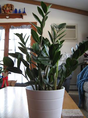 Kamerplanten ikea