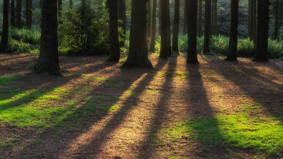 shadows by Alan Ranger - Landscapes Forests ( sony, algenon, www.alanranger.com, alan ranger )
