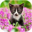 Cute Animal.. file APK for Gaming PC/PS3/PS4 Smart TV