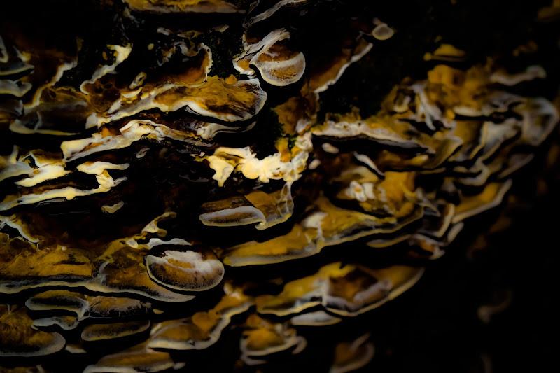 Mushrooms. di M47OH