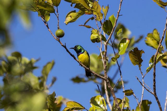 bird-1118873_640.jpg