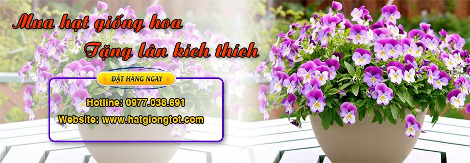Mua hạt giống hoa tặng lân kích thích cho hoa