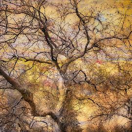 by Al Duke - Landscapes Forests