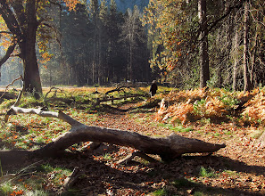 Photo: Group on way to breakfast during gorgeous light still.  #2766.