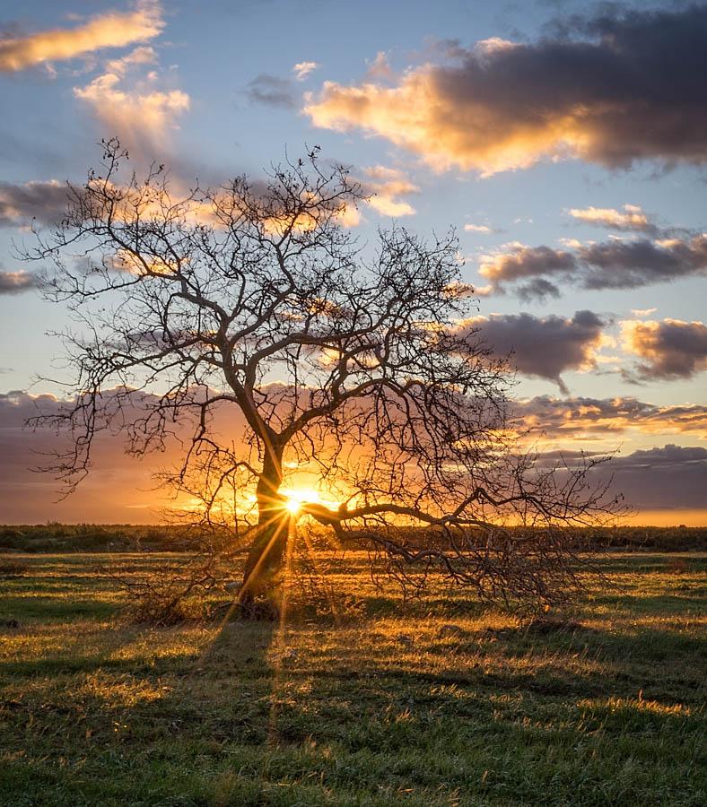 Good Morning by Linda Richardson - Landscapes Sunsets & Sunrises ( clouds, tree, sun burst, sunrise, landscape,  )