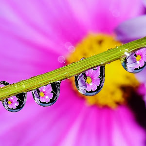 Water drops on flowers 024.JPG