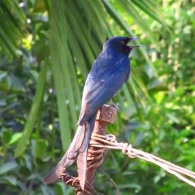 by Satabdi Datta - Animals Birds ( bird, nature, trees,  )