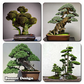 Bonsai Design