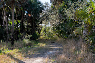 Photo: Entrance to Jones Island,; Lake Woodruff NWR