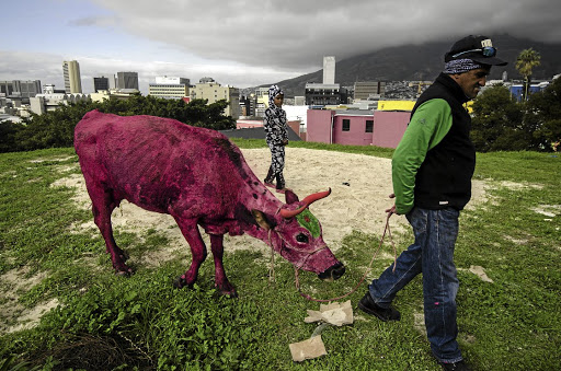 Pretty in pink: A minder leads a painted cow to a film set in Cape Town's Bo Kaap during a shoot this year. The city is popular with film-makers from around the world. Picture: DAVID HARRISON