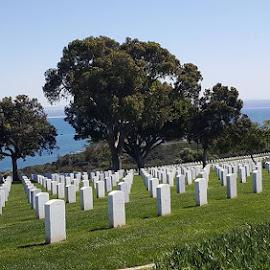 Grave Yard by the Ocean by Suzette Christianson - City,  Street & Park  Cemeteries (  )