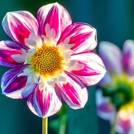 by Darren Sutherland - Flowers Flower Gardens