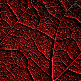 Looks Like a what ? by Ciddi Biri - Nature Up Close Leaves & Grasses ( red, nature, cell, map, blood )