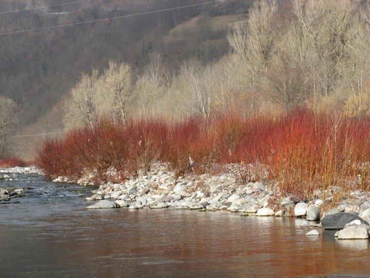 Rosso di febbraio di moschino
