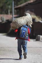 Photo: Y la oveja al hombro, literalmente Patabamba