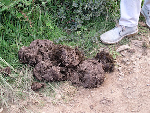 Photo: Elephant dung