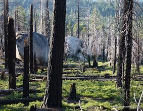 Photo: Burned boulder field