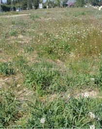 terrain à Eyragues (13)
