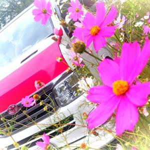 ハイエースバン TRH200Vのカスタム事例画像 シュナ 🐾🐶🐾CT2期生さんの2020年10月07日04:57の投稿