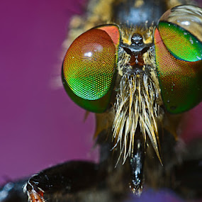 big dew by Dhanu Wijaya - Animals Insects & Spiders