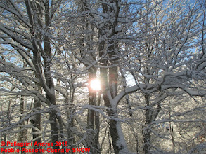 Photo: IMG_9897 il sole tra i rami innevati