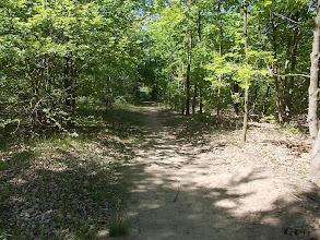 Photo: Út az erdőben