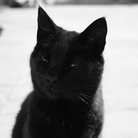 by Paul Morley - Animals - Cats Portraits