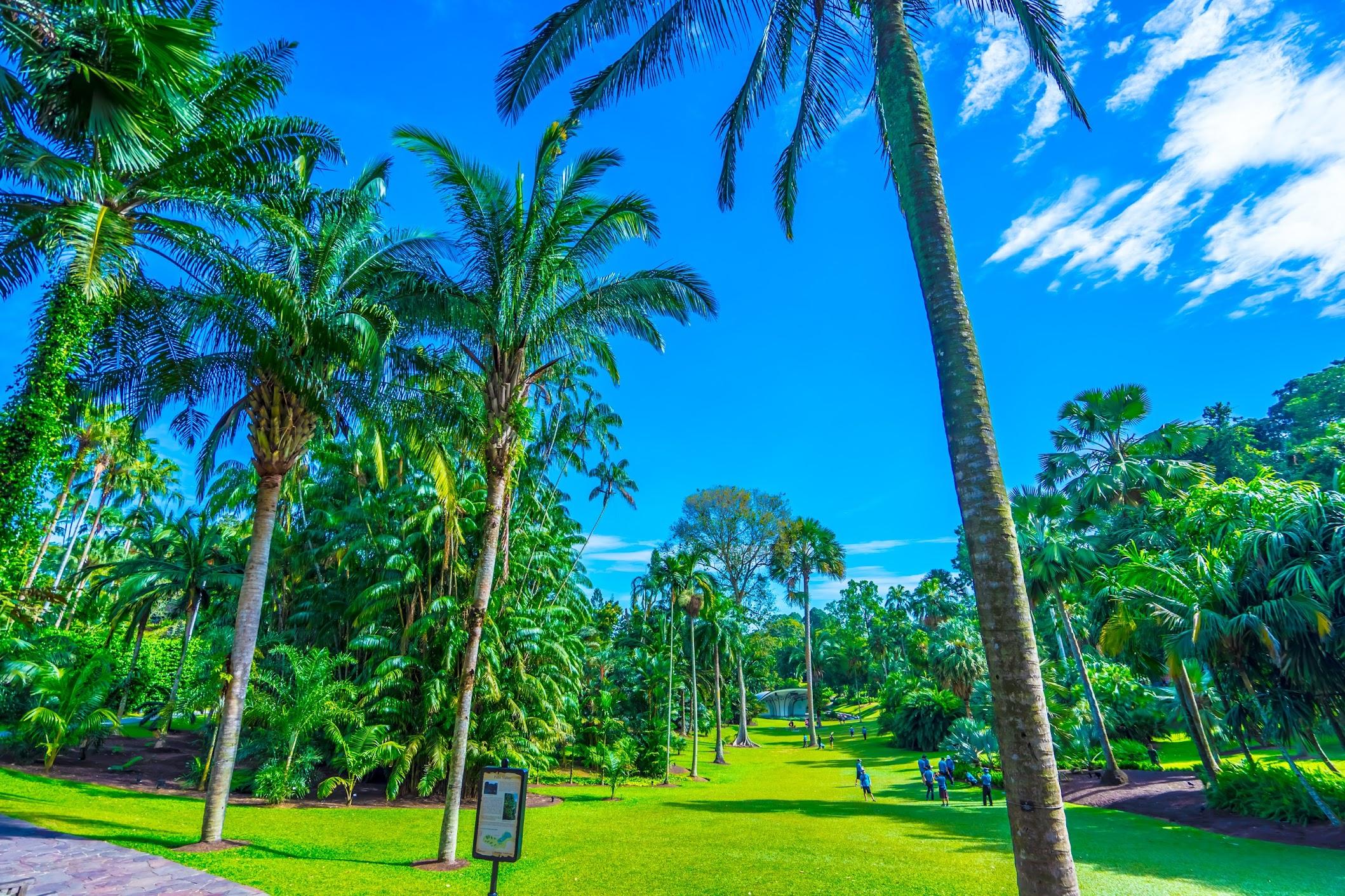 シンガポール植物園(ボタニック・ガーデン) パーム・バレー1