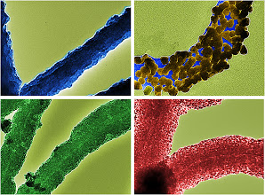 Photo: The biologically inspired silica nanotubes (SiNTs) were significantly improved by coating metal nanoparticles (NPs) inclduing gold, palladium, and iron oxide. The metalized SiNTs have the potential to be developed as electronic materials for future nanoelectronics. The images were taken on a JEOL JEM 2100 operated at 200 kV by Wonjin Jo and Kevin Freedman.