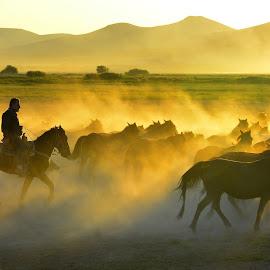 by Mustafa Tor - Animals Horses ( animals, horses )