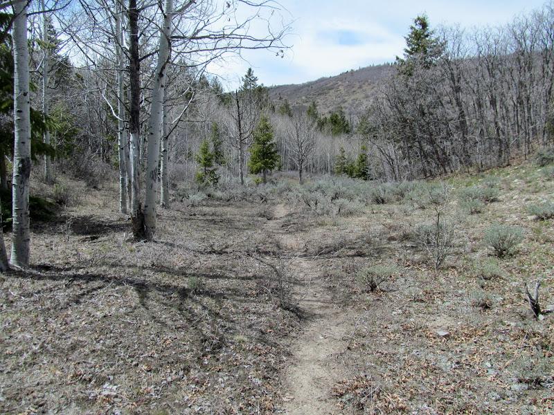 Photo: Trail through the aspen